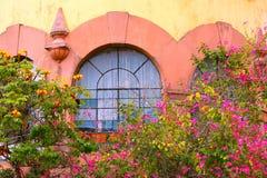Fönster med växter I Arkivfoto