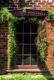Fönster med vinrankor in och ut arkivfoto