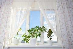 Fönster och gardin i rummet Arkivfoto