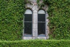 Fönster och murgröna Arkivfoto