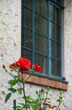 Fönster och rosen Arkivbilder