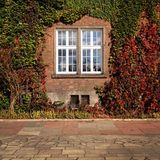 Fönster som är bevuxet med murgrönablad Fotografering för Bildbyråer