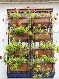 Fönster som dekoreras med andalusian pelargonkrukor Fotografering för Bildbyråer