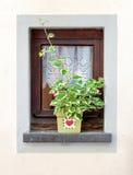Fönster som dekoreras med blomkrukan på sommar arkivbilder