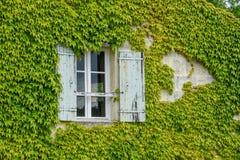 Fönster som omges av vinrankor Arkivbilder