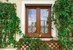 Fönster surronded av den vissnade murgrönan Arkivbilder