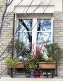 Fönster utifrån med vinterblommor Trädreflexion royaltyfria bilder