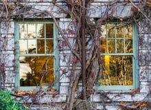 Fönster-vinranka av väggen Royaltyfria Foton