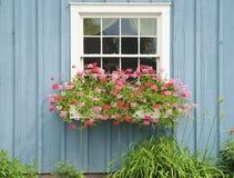 Fönsterblommaask Royaltyfri Bild