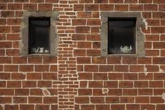 Fönsterkeramik Arkivbilder