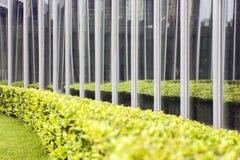 Fönsterrutor av byggnaden vid trädgården royaltyfri bild