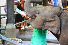 Föräldralöst behandla som ett barn elefanten som den är matning med, mjölkar Royaltyfri Bild