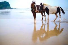 Förälskade hästar Royaltyfri Fotografi