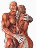 Förälskade muskulösa par Royaltyfria Bilder