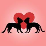 Förälskade svarta katter Arkivbilder