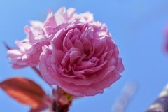 Förälskelse är som en härlig blomma som jag inte kan trycka på, men vars doft gör trädgården ett ställe av fröjd precis samma arkivbild