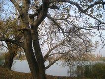 Förälskelse av träd arkivfoto