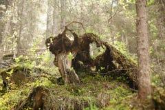 Förälskelse från Österrike Fotografering för Bildbyråer