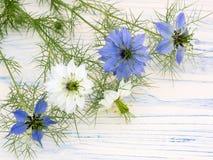 Förälskelse-i-en-mist blommar på ett vitt träbräde Arkivfoto