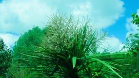 Förälskelse i gräsplan Arkivfoto
