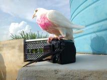 förälskelse med fåglar Royaltyfria Foton