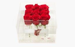 Förälskelse och passion röd rosa bukett i ask illustration för design för bakgrundbakgrundskort blom- Akvarium med fisken och ros arkivbild