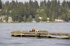 Förälskelse på den lördag eftermiddagen på sjön Washington Seattle Royaltyfria Foton
