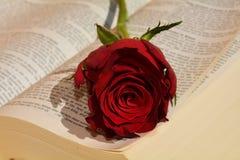 förälskelse ringer att gifta sig för symboler Arkivfoto