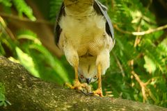 Förälskelse som gör fåglar royaltyfria foton