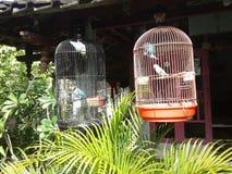 Förälskelsefågel arkivfoto