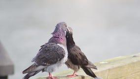 Förälskelsefåglar och en tree Arkivbilder