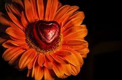 Förälskelsehjärta och Gerbera arkivfoton