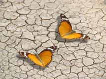 Förälskelsekamratskap och överenskommelse Arkivfoton