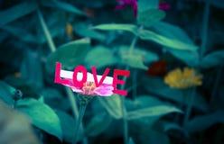 Förälskelsekort med blomman Arkivbilder