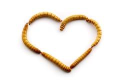 Förälskelsemealworms Royaltyfria Bilder