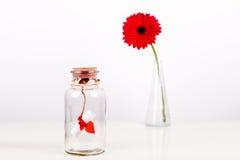Förälskelsemeddelande i en buteljera Rulle av vitbok med den röda tråden och den röda gerberaen blommar på en vit bakgrund saint Arkivfoton