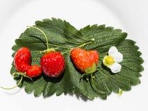 Förälskelsen och jordgubbarna Royaltyfri Fotografi