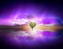 förälskelseträd i purpurfärgad himmel Arkivbild