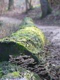 Förändra Baumstamm är Wegesrand arkivbild