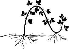 Förökning, genom att varva Intrig för reproduktion för Blackberry växt vegetativ royaltyfri illustrationer