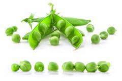 för ärtaärtor för samling ny grön fröskida Arkivfoto
