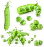 för ärtaärtor för samling ny grön fröskida Arkivbild