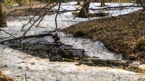 Is för Ð-¡ stank i våren Akademgorodok Royaltyfria Bilder