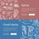 För ört- och kryddabaner för vektor hand dragen illustration stock illustrationer