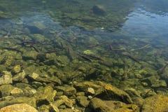 För Achstà för landskapskyddsområde rze ¼ Sjön Piburger ser och många fisken Tirol äldst natursylter Oetz fjällängar Royaltyfri Bild