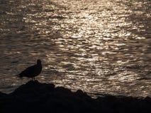 för aftonhav för höst baltisk solnedgång Arkivbild