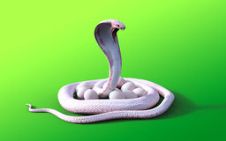 för albinokonung för tolkning som 3D orm och ägg för kobra isoleras på grön bakgrund Royaltyfri Fotografi