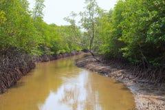 För ana för vått land område tidvattens- vatten av mangroveskogen i pranburina Royaltyfria Foton