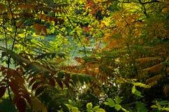 För apelsin, röda och gröna färger för guling, av sidor vid sjön på hösten, Belgrade Arkivbilder