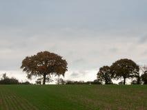För bakgrundslantgården för hösten lämnar det mulna lynniga trädet för landskapet gras Arkivfoto